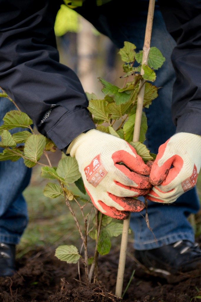Scott Group leads tree planting initiative for Outward Bound Trust