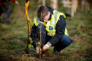 OBT tree planting